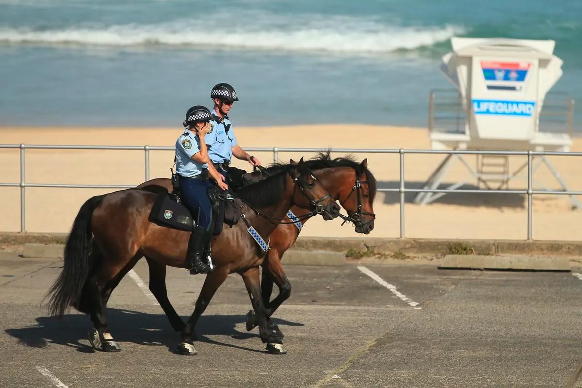 Police horses on bondi