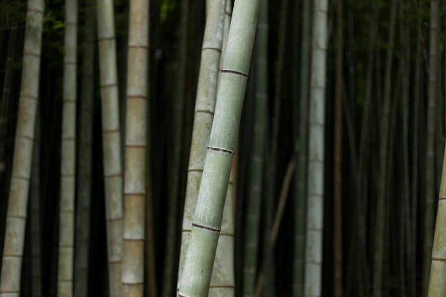 quiksilver highline board shorts bamboo